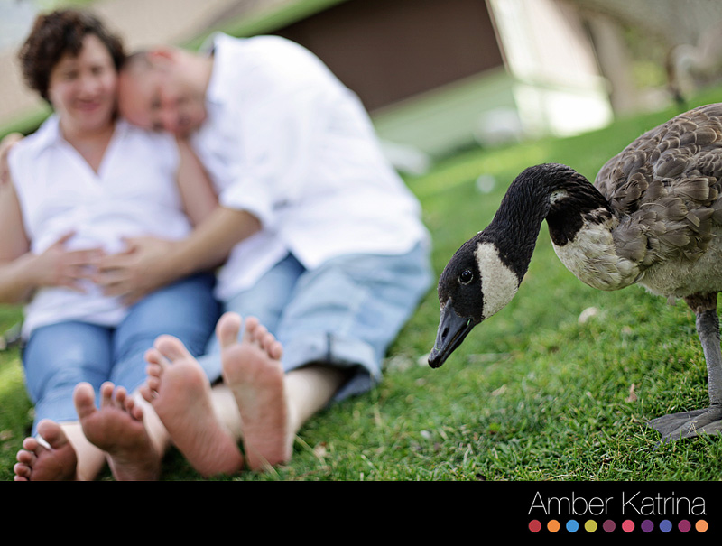 Ventura Maternity Dog Photography