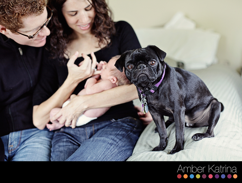 Maternity Newborn Photo Shoot in La Canada-Flintridge with dog